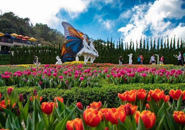 Kinh nghiệm du lịch Bà Nà Hill Đà Nẵng: Vườn hoa ở Bà Nà Hill