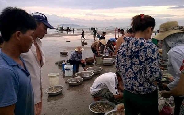 Địa chỉ mua hải sản giá rẻ ở Đà Nẵng mang về làm quà: Mua hải sản ở đâu Đà Nẵng giá rẻ?