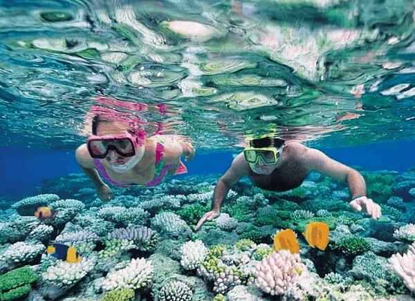 Lặn ngắm san hô tại Cù Lao Chàm/ Hoạt động vui chơi giải trí thú vị ở Đà Nẵng