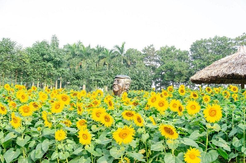 Có gì ở khu sinh thái Phoenix Garden Đan Phượng? Cánh đồng hoa hướng dương ở Phoenix Garden Đan Phượng