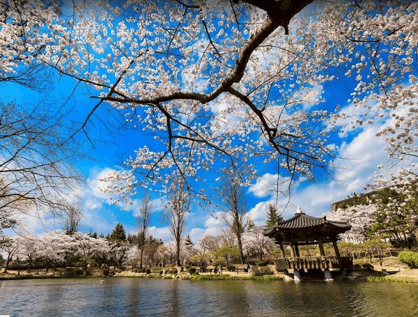 Các địa điểm du lịch đẹp ở Hàn Quốc. Vọng lâu Bomun