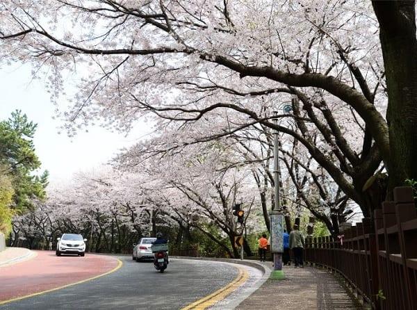 Địa điểm chụp ảnh cưới ở Hàn Quốc. Địa điểm chụp ảnh cưới đẹp ở Hàn Quốc. Con đường ánh trăng Dalmaji