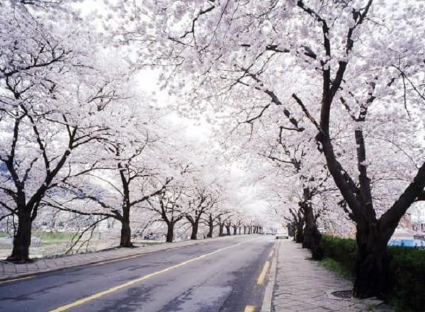 Địa điểm chụp ảnh cưới ở Hàn Quốc. Tp địa điểm hụp ảnh cưới ở Hàn Quốc đẹp nhất. Công Viên Yeouido
