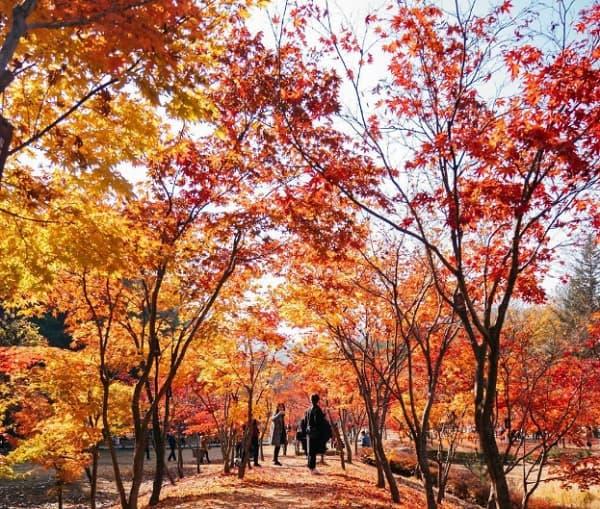 Địa điểm chụp ảnh cưới ở Hàn Quốc. Công viên quốc gia Seoraksan. Địa điểm chụp ảnh cưới nổi tiếng ở Hàn Quốc