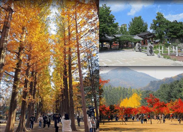 Địa điểm du lịch Hàn Quốc mùa thu đẹp nhất. Hàn Quốc có địa điểm du lịch nào đẹp? Đảo Nami