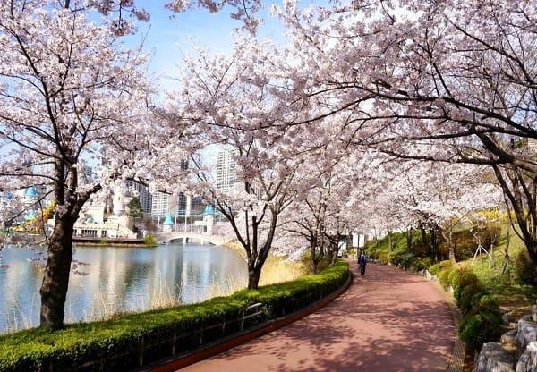 Địa điểm du lịch đẹp nhất Hàn Quốc. Nên đi đâu chơi, tham quan ở Hàn Quốc. Hồ Seokchon