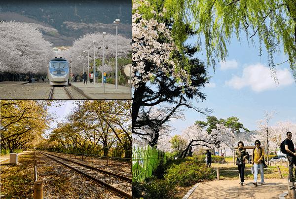 Hàn Quốc có địa điểm du lịch nào hấp dẫn? Nên đi đâu chơi, tham quan ở Hàn Quốc? Nhà ga Gyeonghwa