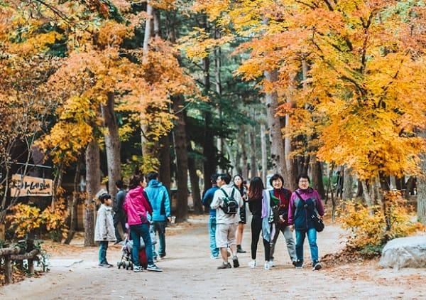 Du lịch Seoul - Nami 3 ngày 2 đêm. Du lịch Seoul - Nami nên đi đâu chơi? Đảo Nami
