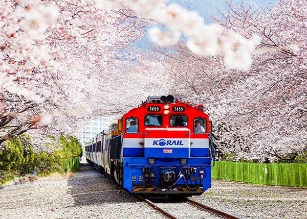 Lễ hội hoa anh đào ở Hàn Quốc diễn ra ở đâu, khi nào?