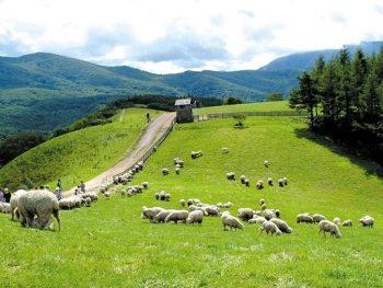Trang trại cừu Deagwallyeong's Sheep Farm ở đâu, có gì thú vị