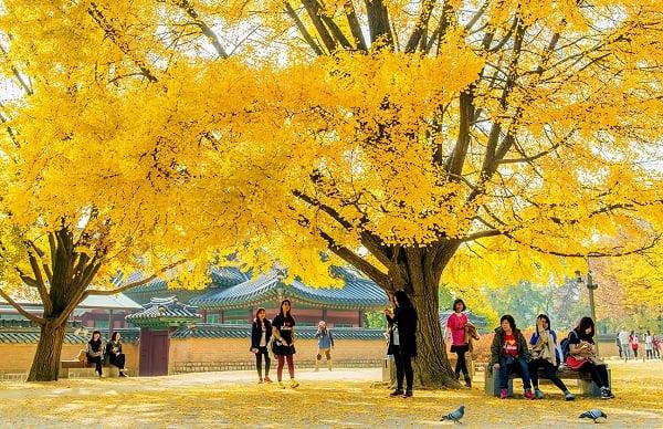 Review du lịch Hàn Quốc mùa thu