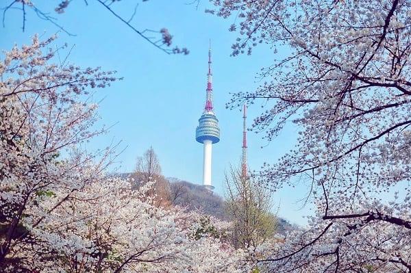 Địa điểm du lịch đẹp nhất Hàn Quốc vào tháng 3