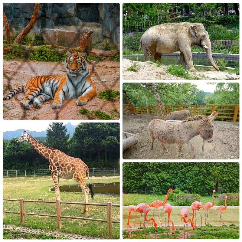 Địa điểm tham quan ở Seoul cho trẻ em, Vườn thú Seoul