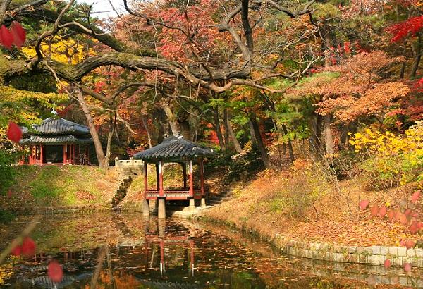 Du lịch Seoul nên đi cung điện nào? Vườn Thượng Uyển Huwon ở Cung điện Changdeokgung