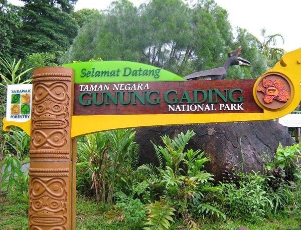 Đến Kuching Malaysia nên đi chơi ở đâu?Ngắm hoa Rafflesia trong vườn quốc gia Gunung Gading