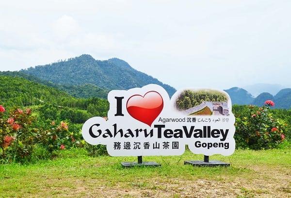 Thung lũng trà Gahuru - địa điểm tham quan ở Ipoh nằm ngoài thành phố