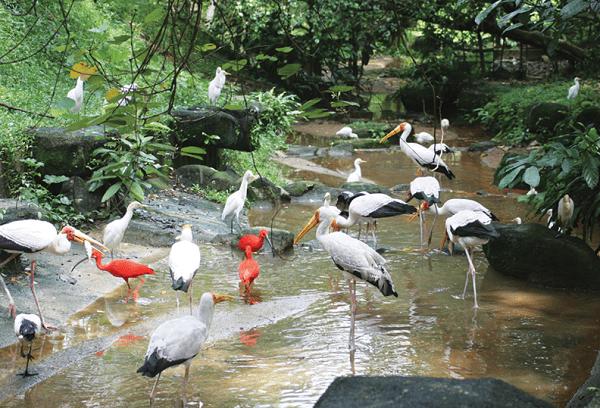 Kinh nghiệm du lịch Kuala Lumpur, công viên Kuala Lumpur
