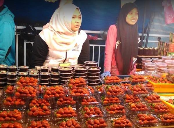 Du lịch Cameron Malaysia nên mua gì về làm quà? Dâu Tây. Món quà du lịch Cameron dành cho bạn bè