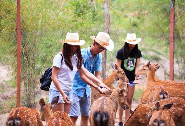 Kinh nghiệm du lịch đảo Hoa Lan Nha Trang: Du lịch đảo Hoa Lan có gì hấp dẫn?