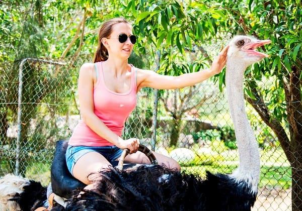 Kinh nghiệm du lịch đảo khỉ Nha Trang: Du lịch đảo khỉ chơi gì vui?