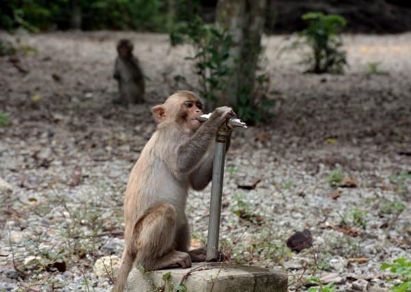 Kinh nghiệm du lịch đảo khỉ Nha Trang: Du lịch đảo khỉ có gì chơi vui, thú vị?