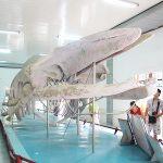 Những lễ hội lớn nhất ở Nha Trang diễn ra thường niên. Du lịch Nha Trang mùa lễ hội. Các lễ hội nên tham gia ở Nha Trang lớn, đông