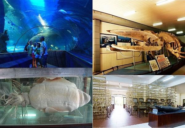 Danh sách địa điểm du lịch Nha Trang: Du lịch Nha Trang đi đâu chơi?