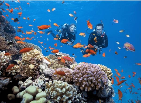 Du lịch đảo Dừa có gì hay? Kinh nghiệm đi Đảo Dừa Nha Trang