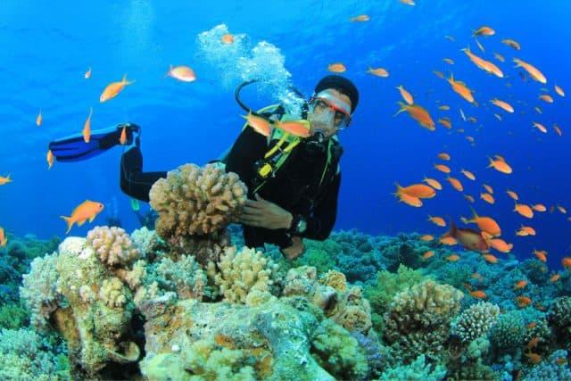 Kinh nghiệm du lịch Hòn Ông (Đảo Cá Voi – Nha Trang) miễn chê. Hướng dẫn, cẩm nang du lịch Hòn Ông cụ thể đường đi, ăn ở, cảnh đẹp