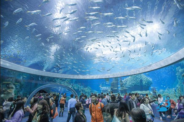 Chơi gì ở Nha Trang/ Viện Hải Dương học khám phá thế giới đại dương