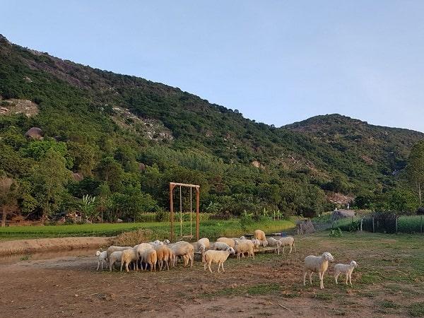 Nên tới đồng cừu Tiên Sa thời gian nào? Buổi chiều thời điểm đẹp đi đồng cừu Tiên Sa
