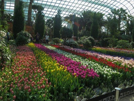 Top những công viên xanh ở Singapore nổi tiếng nhất. Gardens by the Bay. Công viên xanh ở Singapore