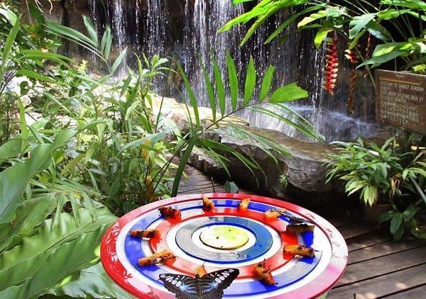 Kinh nghiệm du lịch đảo Sentosa, tham quan Butterfly Park & Insect Kingdom