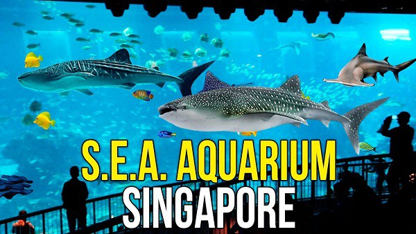 Thủy cung SEA Aquarium ở Singapore