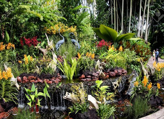 Vườn bách thảo Botanic Gardens. Vườn lan lớn nhất ở Singapore. National Orchid Garden