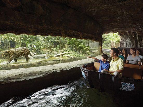Kinh nghiệm đi River Safari Singapore, River Safari có gì hấp dẫn?
