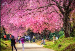 Đi du lịch Chiang Mai vào mùa nào đẹp nhất? Mùa khô từ tháng 10 đến tháng 5 năm sau