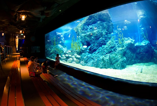 Địa điểm du lịch Pattaya nổi tiếng nhất: Pattaya có địa điểm du lịch nào đẹp?
