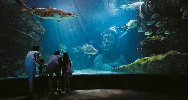 Du lịch Bangkok: Thủy cung Sea life Bangkok ocean world