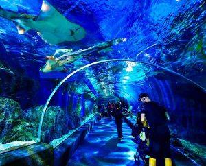 Sea Life Bangkok Ocean World có gì hay? Đường hầm đại dương tại Sea Life Bangkok Ocean World