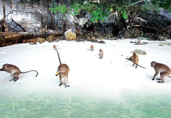 Review kinh nghiệm du lịch Koh Phi Phi bổ ích