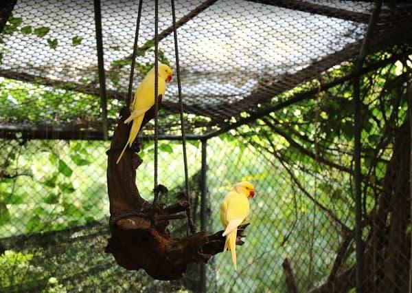 Kinh nghiệm du lịch Phuket: Du lịch Phuket đi đâu chơi? Vườn chim Bird Park Phuket