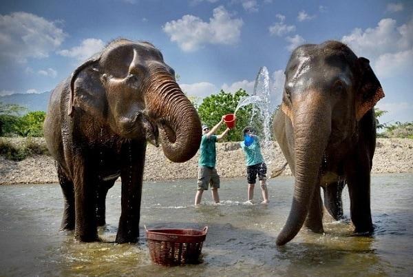 Khám phá công viên voi ở Chiang Mai