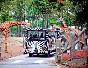 Chiang Mai Night Safari có gì thú vị? Các hoạt động thú vị ở Chiang Mai Night Safari là gì?