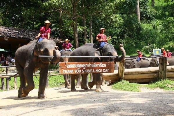 Du lịch Chiang Mai nên đi đâu chơi là vui nhất?