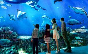 Thuỷ Cung Sea Life Bangkok Ocean World - Khu vui chơi hấp dẫn trẻ em ở Bangkok