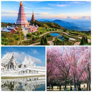 Du lịch Thái Lan tháng 2 đến Chiang Mai ngắm hoa anh đào nở