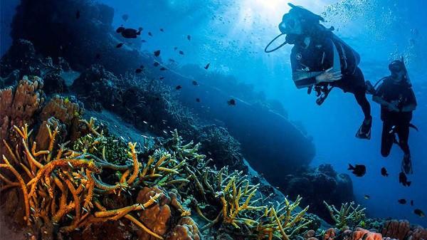 Du lịch đảo Koh Tao tham gia lặn biển trải nghiệm vô cùng thú vị